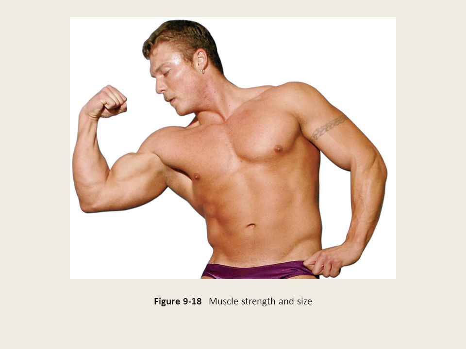Figure 9-18 Muscle strength and size