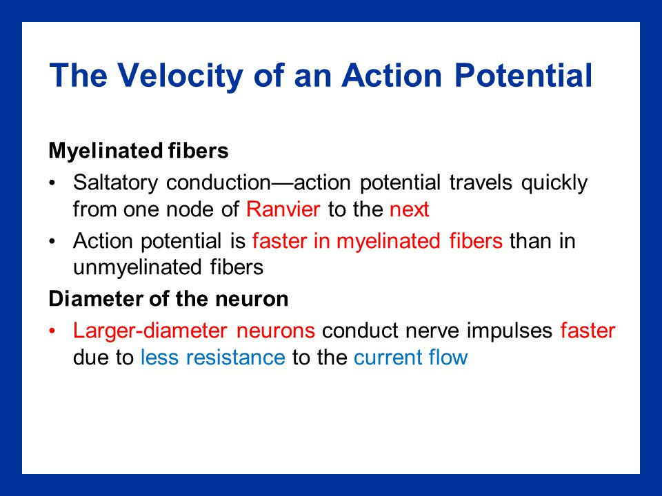 The Velocity of an Action Potential