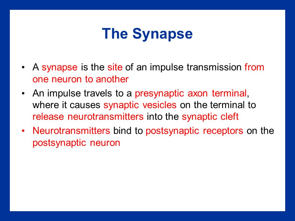 The Synapse A synapse is the site of an impulse transmission from one neuron to another.