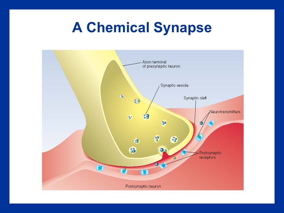 A Chemical Synapse