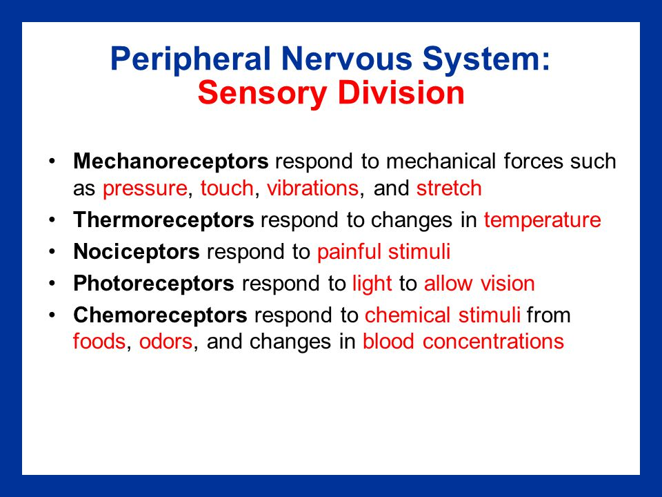 Peripheral Nervous System: Sensory Division