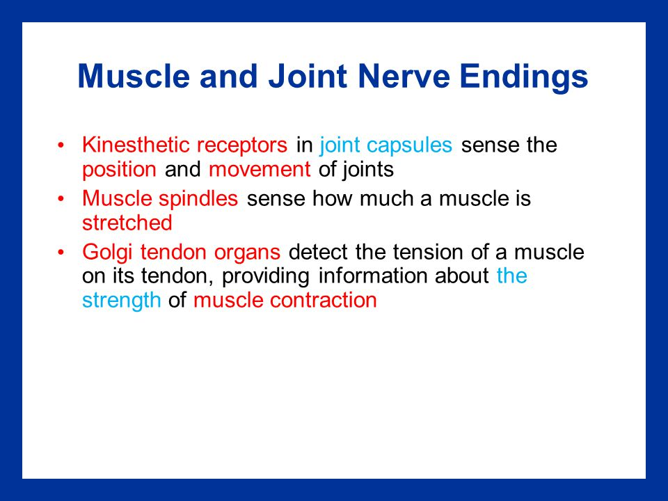 Muscle and Joint Nerve Endings