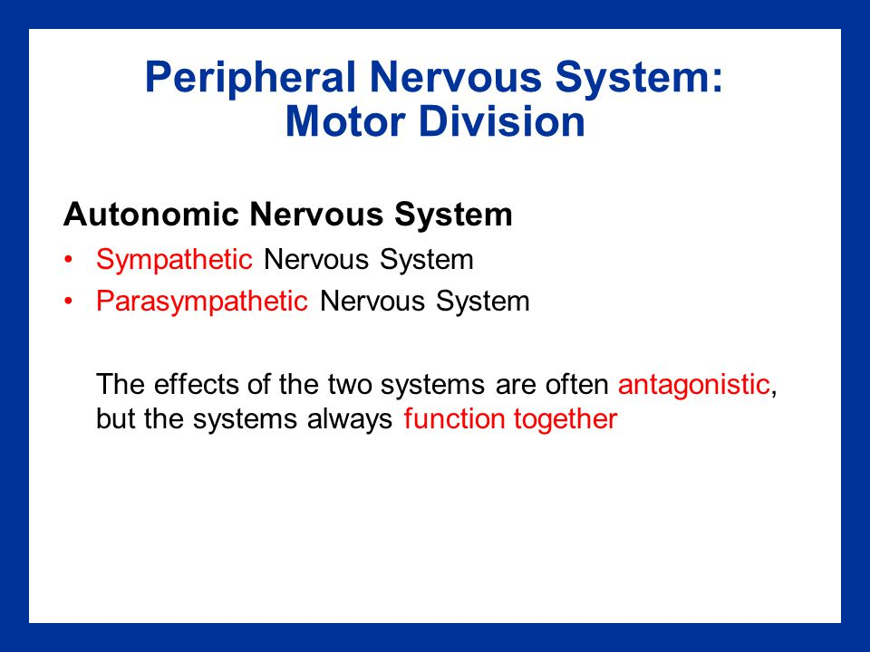 Peripheral Nervous System: Motor Division