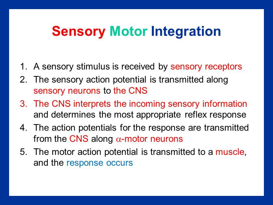 Sensory Motor Integration