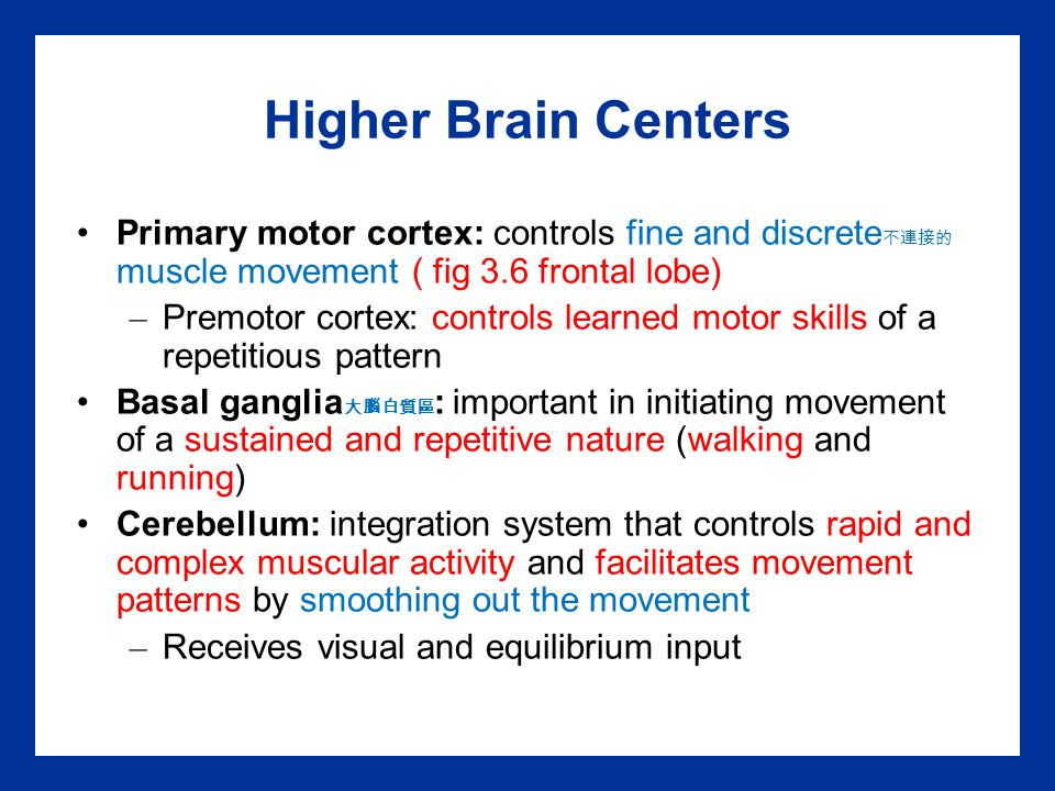 Higher Brain Centers Primary motor cortex: controls fine and discrete不連接的muscle movement ( fig 3.6 frontal lobe)