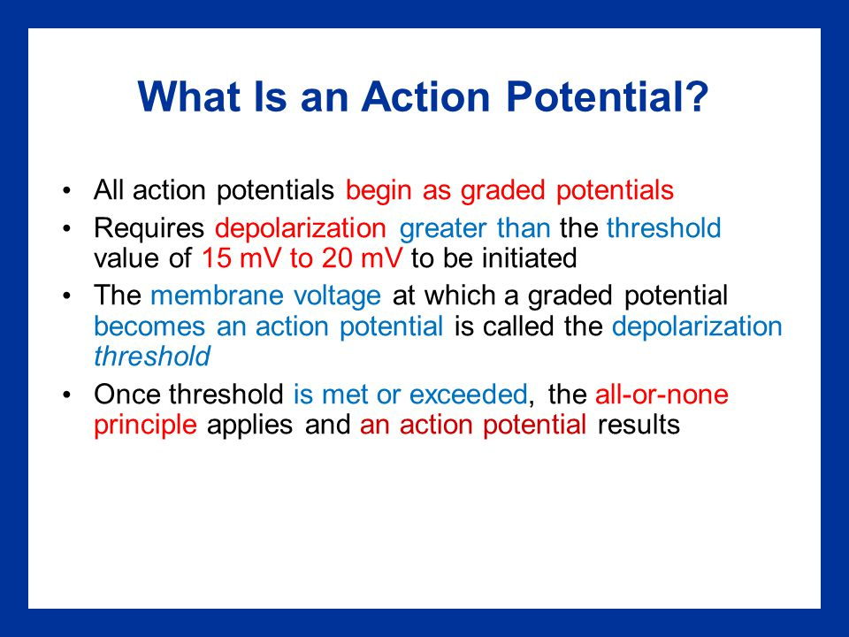 What Is an Action Potential