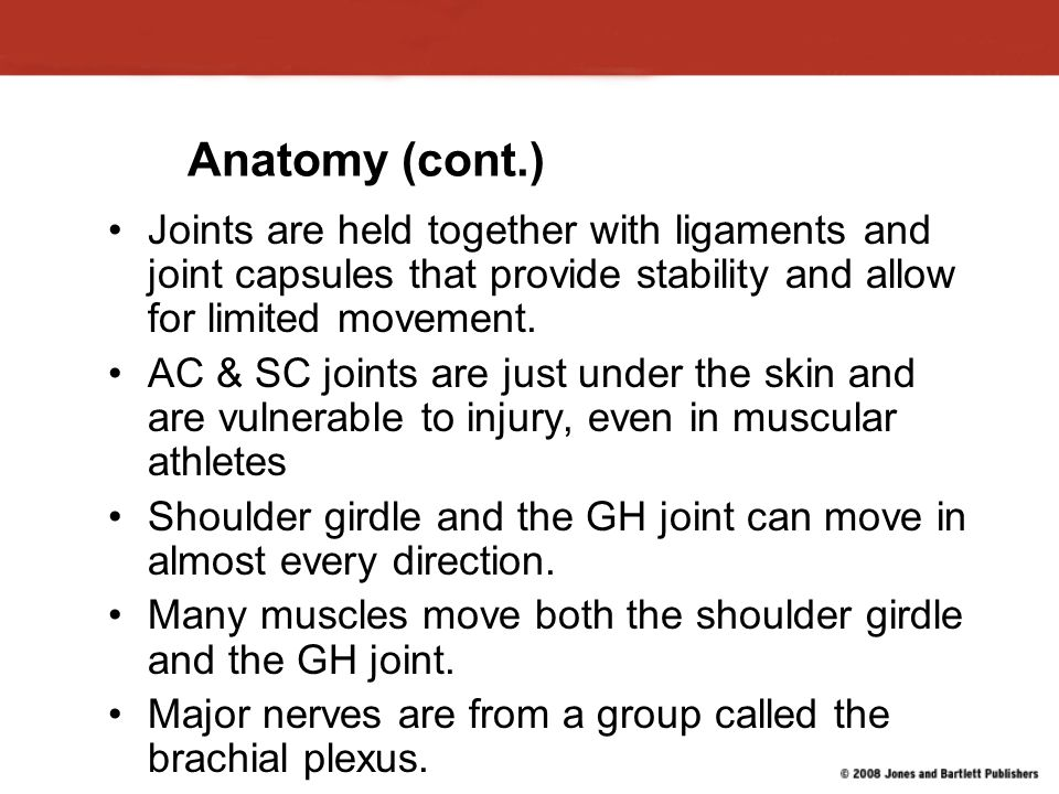 Anatomy (cont.) Joints are held together with ligaments and joint capsules that provide stability and allow for limited movement.