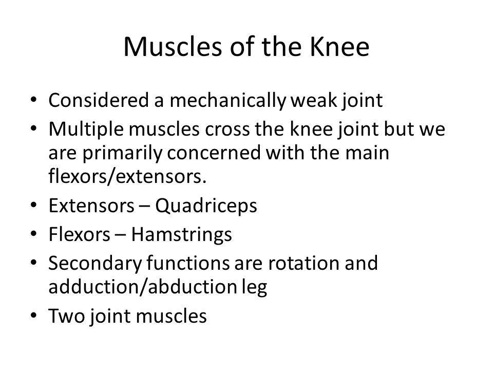 Muscles of the Knee Considered a mechanically weak joint