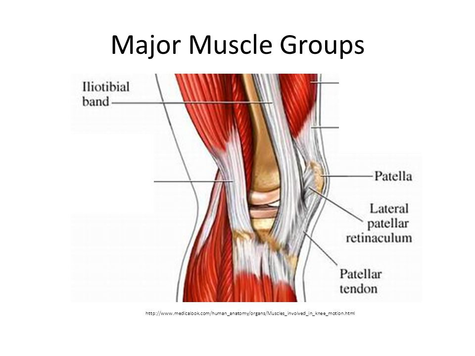 Major Muscle Groups http://www.medicalook.com/human_anatomy/organs/Muscles_involved_in_knee_motion.html.