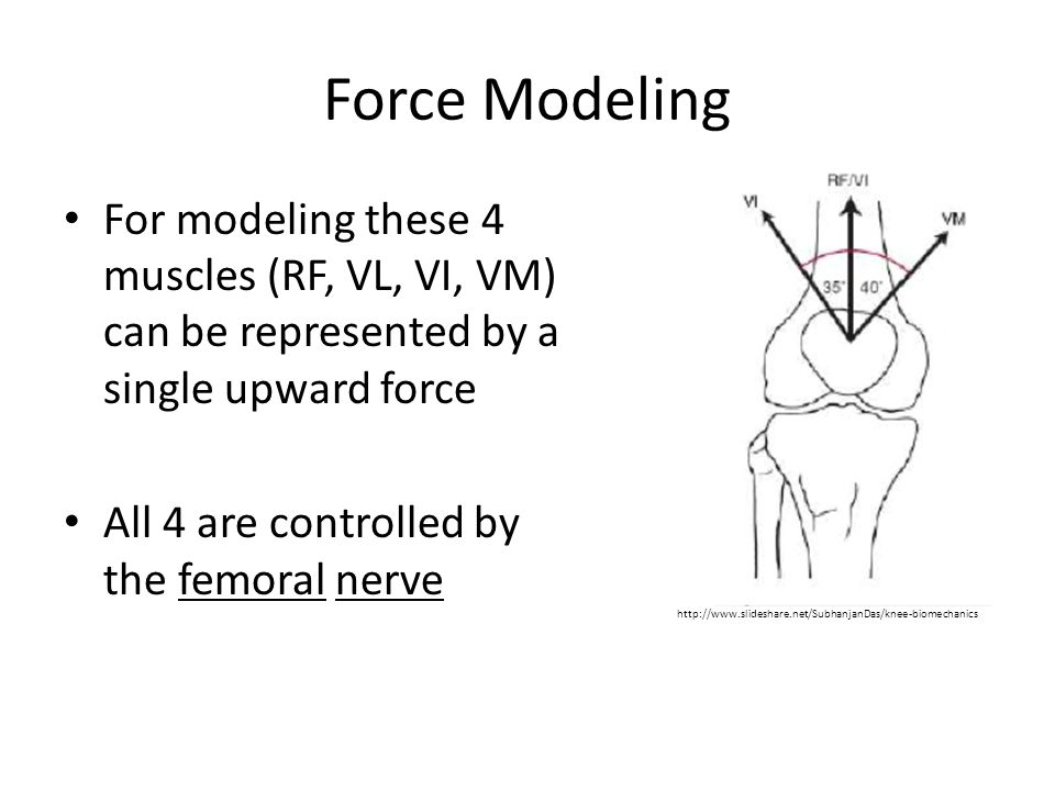 Force Modeling For modeling these 4 muscles (RF, VL, VI, VM) can be represented by a single upward force.