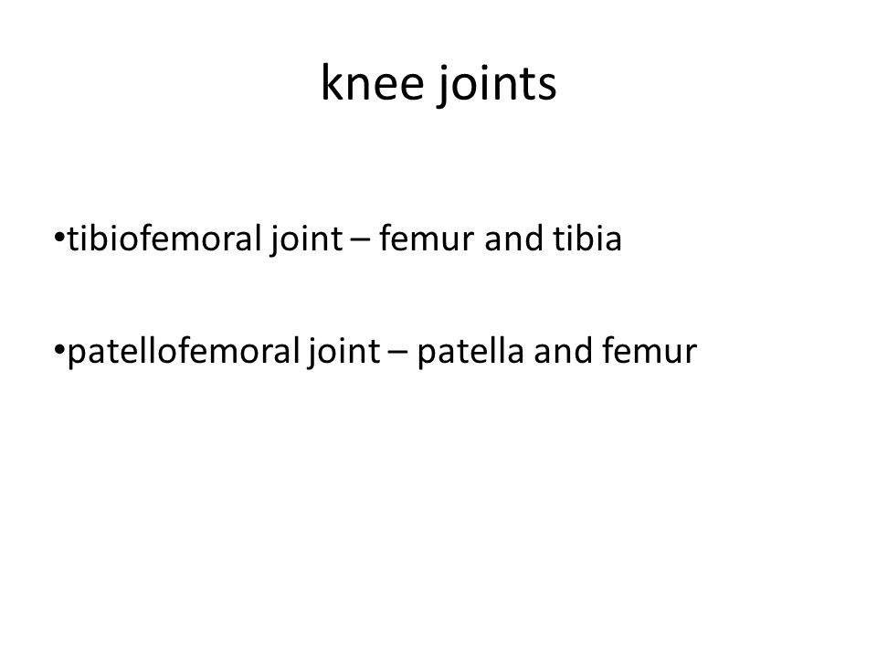 knee joints tibiofemoral joint – femur and tibia