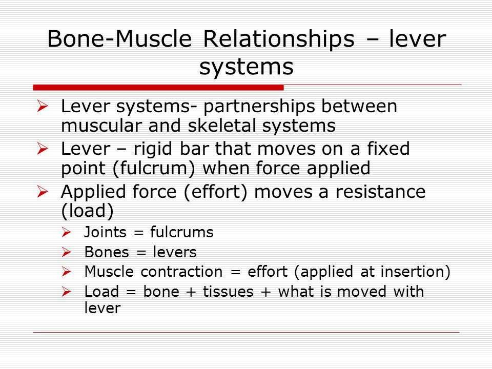 Bone-Muscle Relationships – lever systems