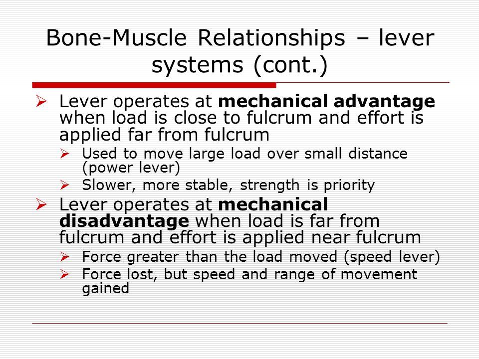 Bone-Muscle Relationships – lever systems (cont.)