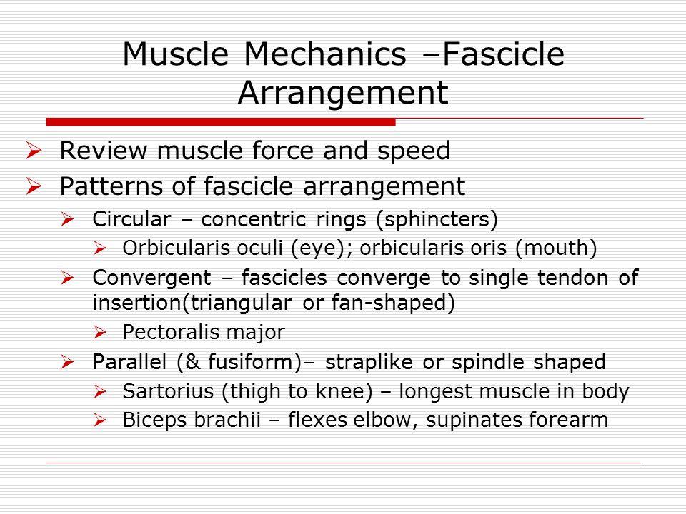 Muscle Mechanics –Fascicle Arrangement