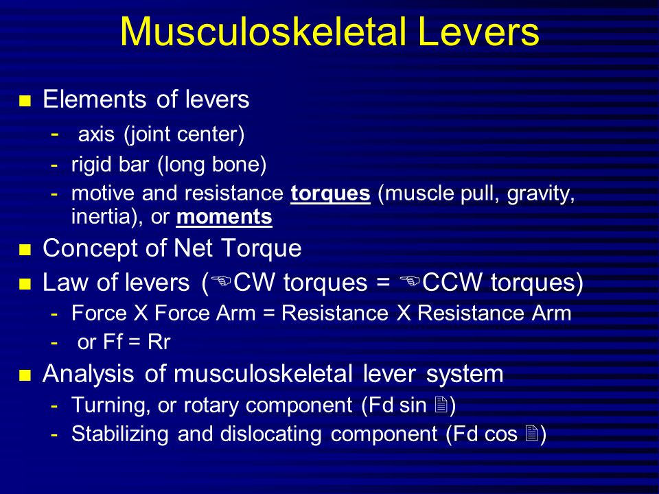 Musculoskeletal Levers