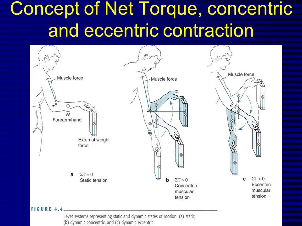 Concept of Net Torque, concentric and eccentric contraction