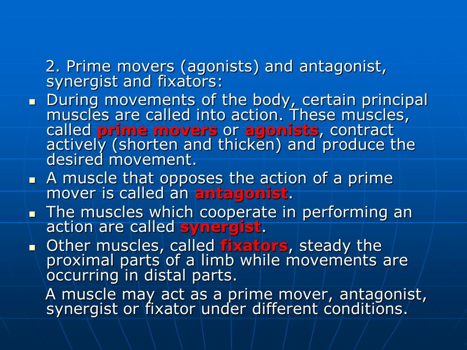 2. Prime movers (agonists) and antagonist, synergist and fixators: