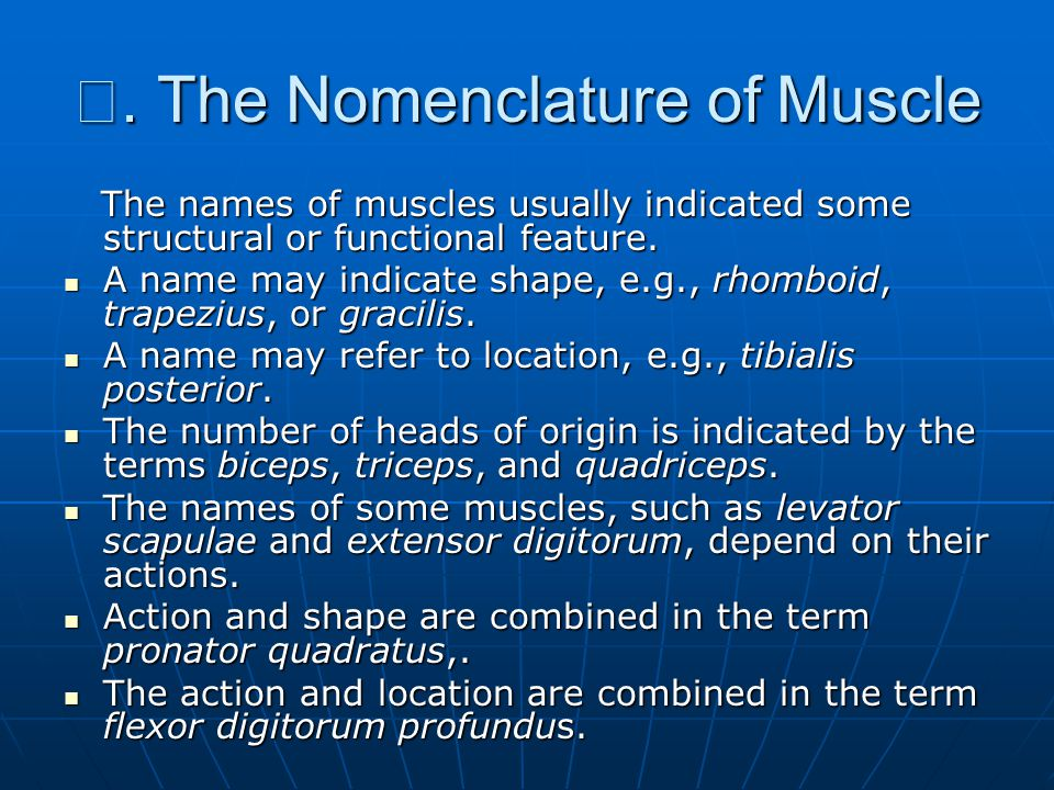 Ⅲ. The Nomenclature of Muscle