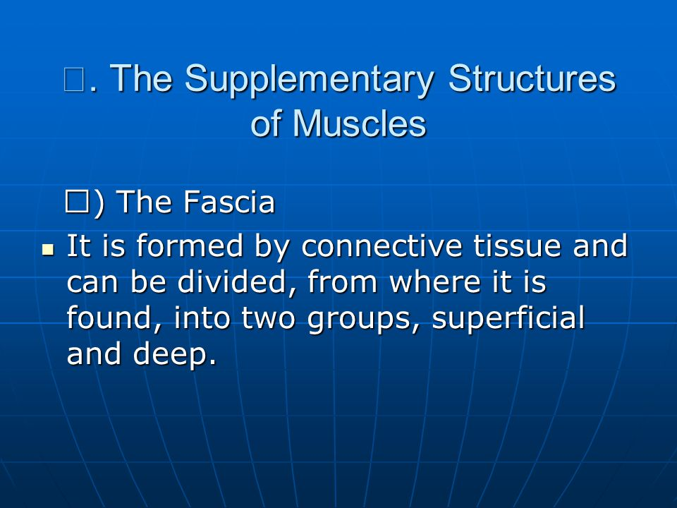 Ⅳ. The Supplementary Structures of Muscles