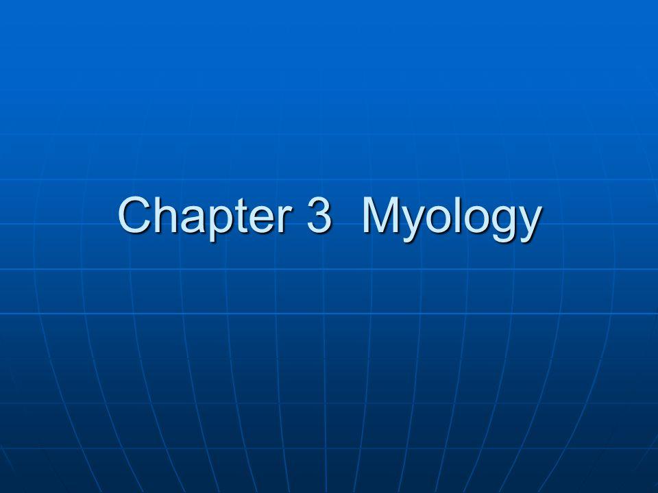 Chapter 3 Myology