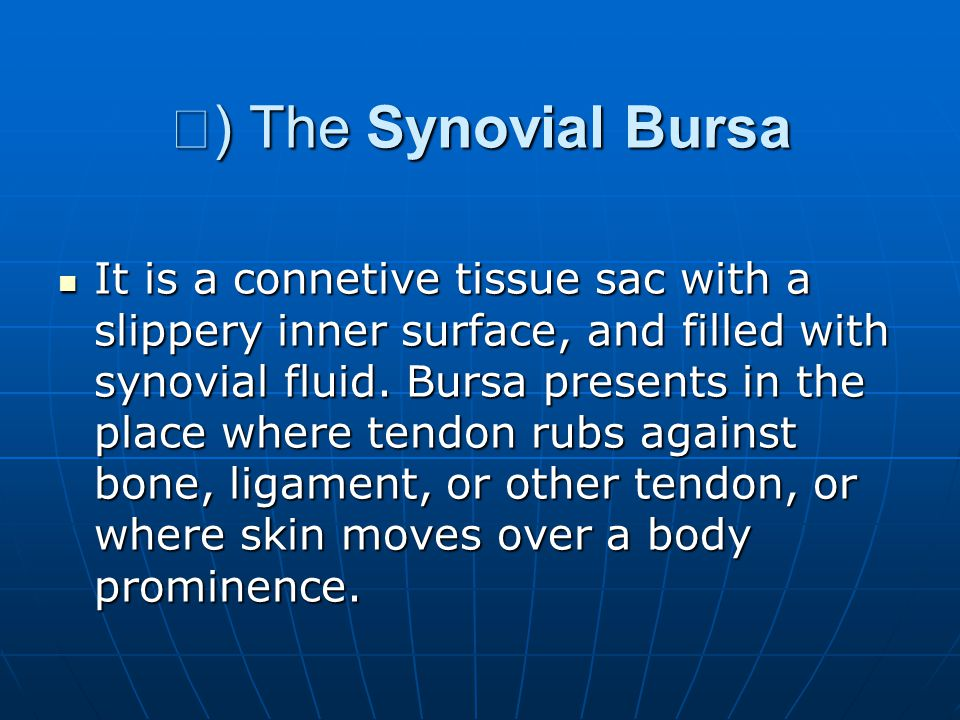Ⅱ) The Synovial Bursa
