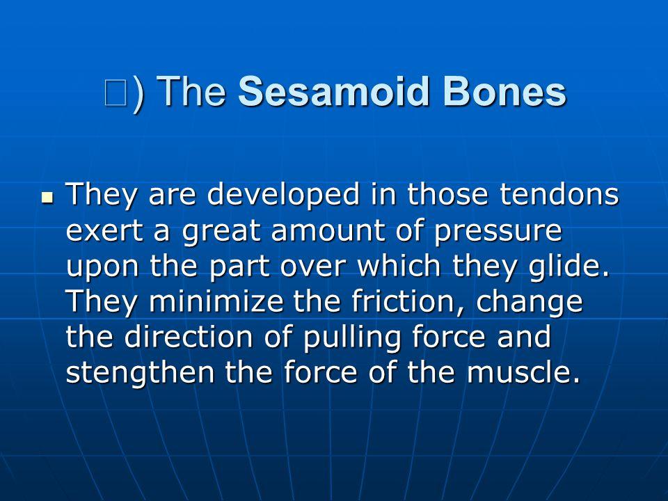Ⅳ) The Sesamoid Bones