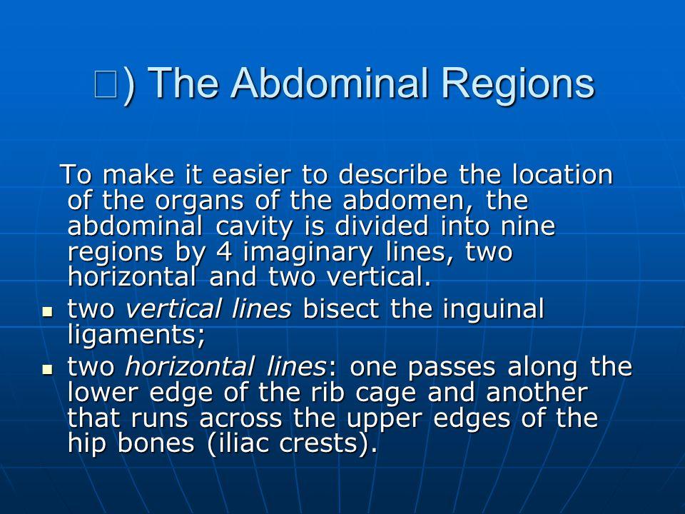 Ⅱ) The Abdominal Regions