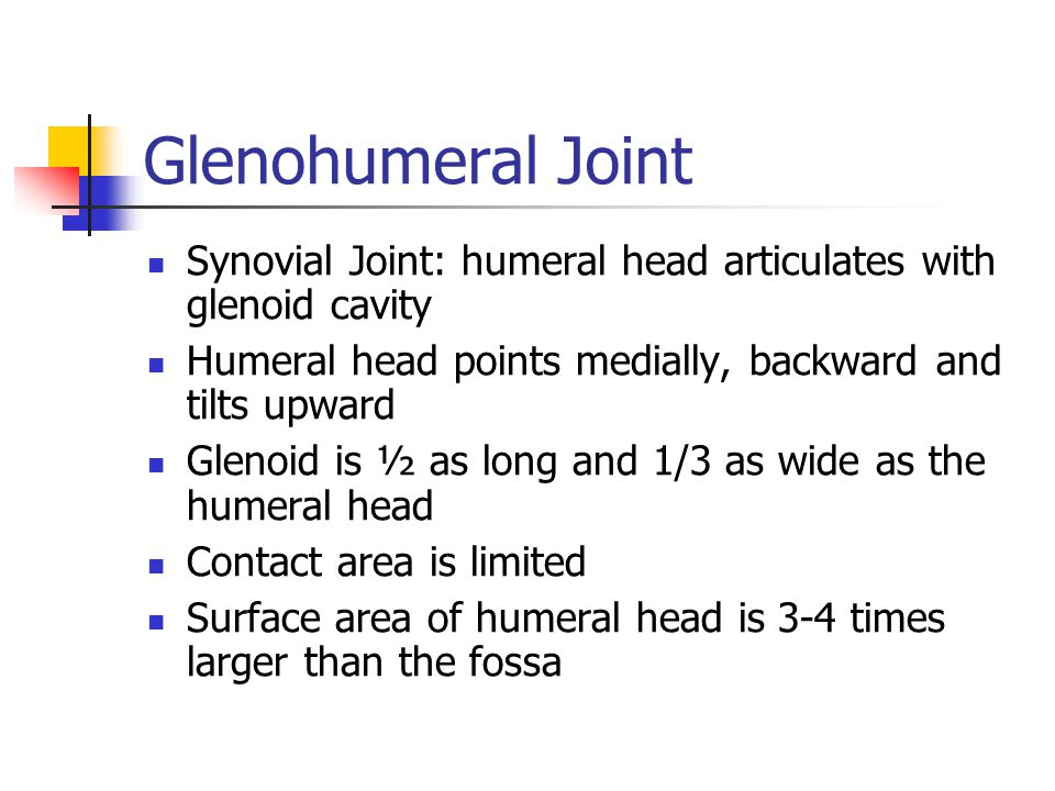 Glenohumeral Joint Synovial Joint: humeral head articulates with glenoid cavity. Humeral head points medially, backward and tilts upward.