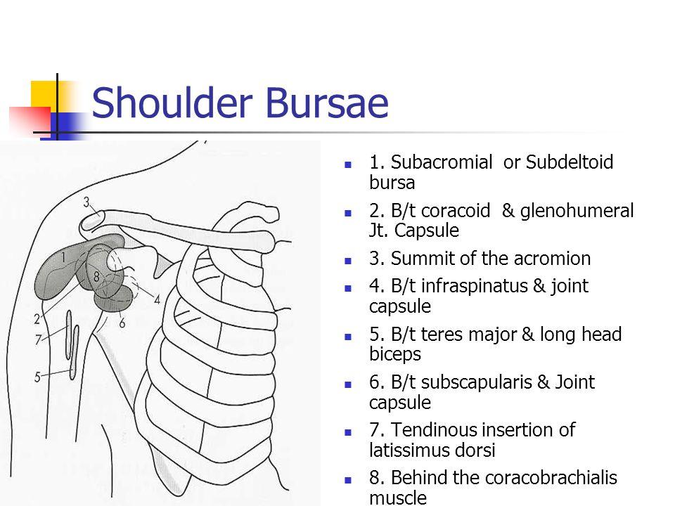 Shoulder Bursae 1. Subacromial or Subdeltoid bursa