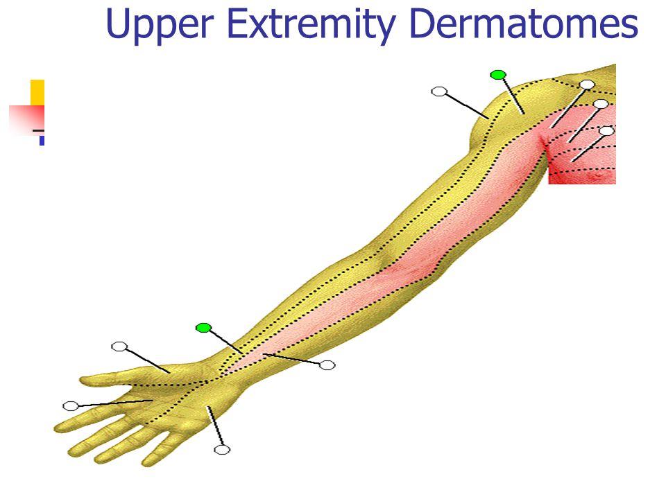 Upper Extremity Dermatomes
