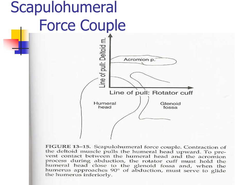 Scapulohumeral Force Couple