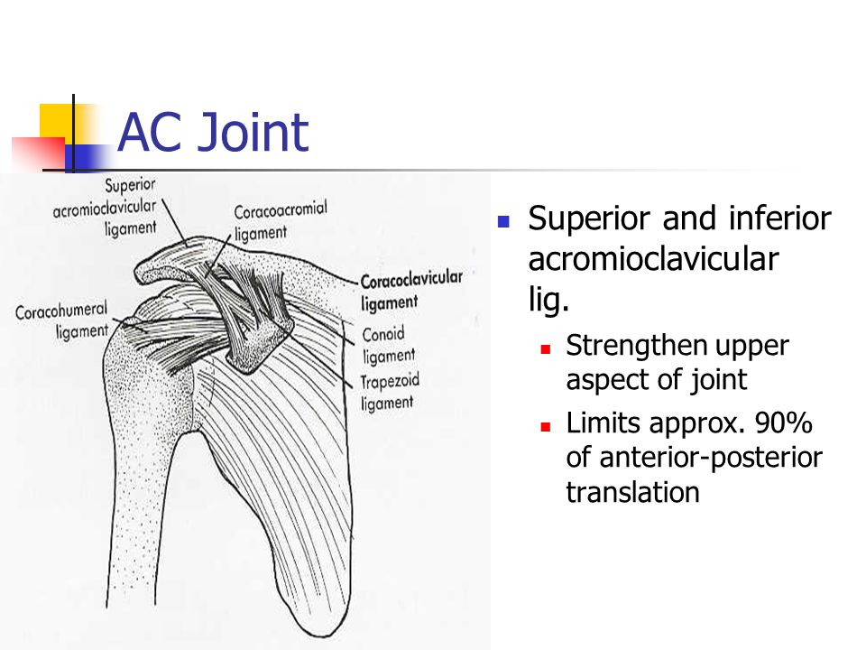 Shoulder Assessment Ppt Video Online Download