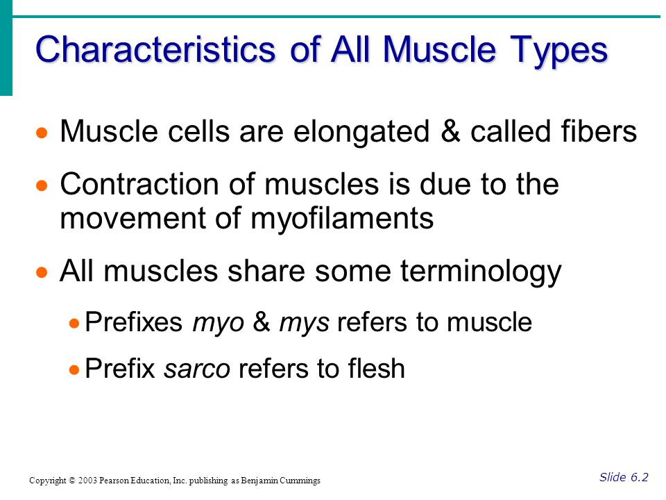 Characteristics of All Muscle Types