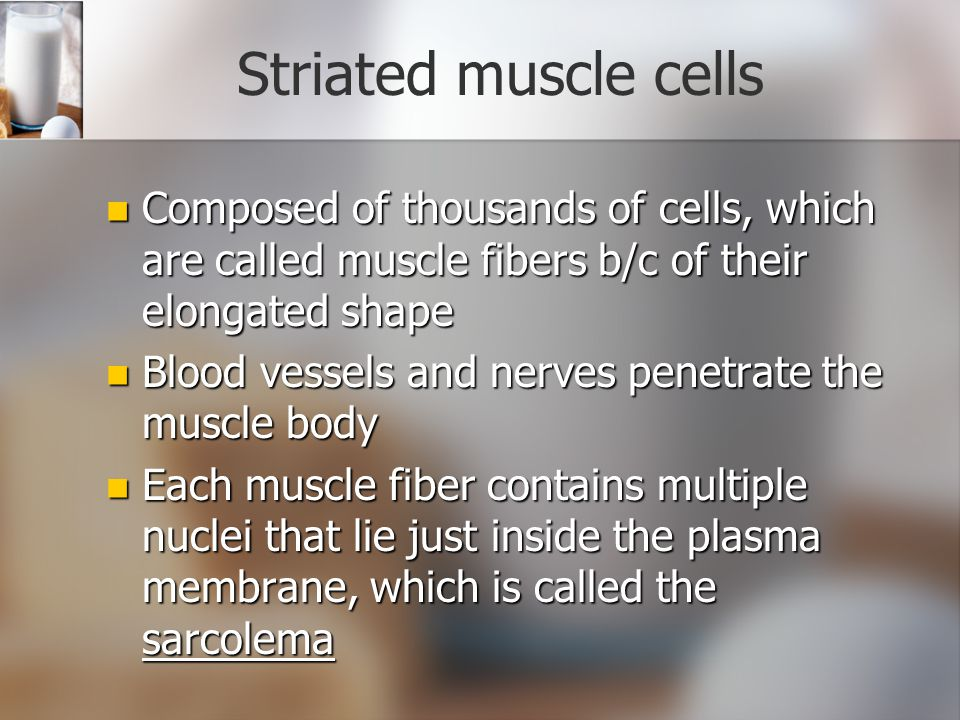 Striated muscle cells Composed of thousands of cells, which are called muscle fibers b/c of their elongated shape.