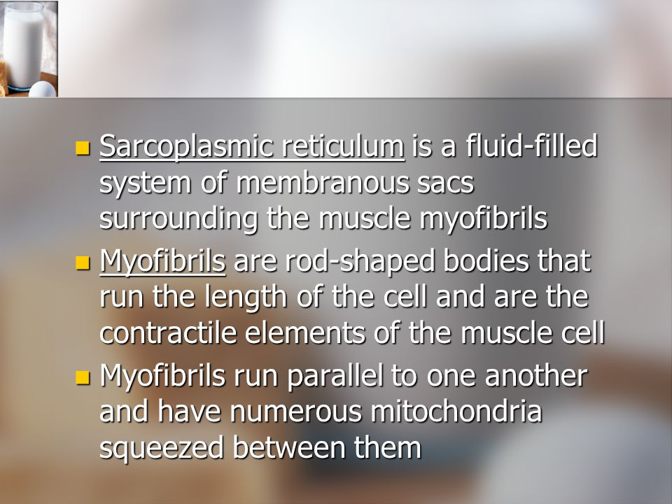 Sarcoplasmic reticulum is a fluid-filled system of membranous sacs surrounding the muscle myofibrils