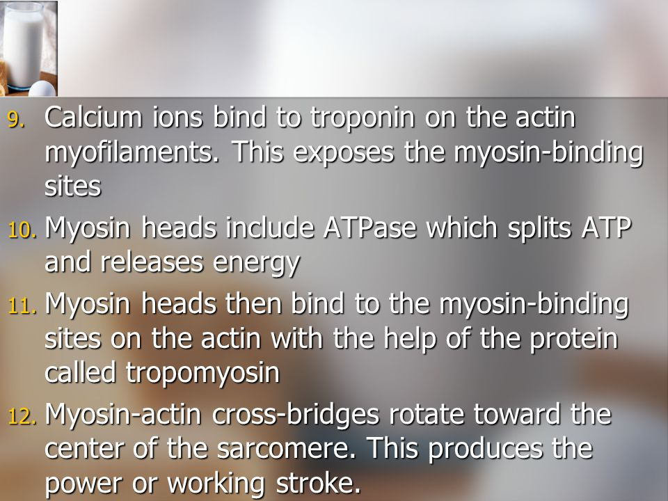 Calcium ions bind to troponin on the actin myofilaments
