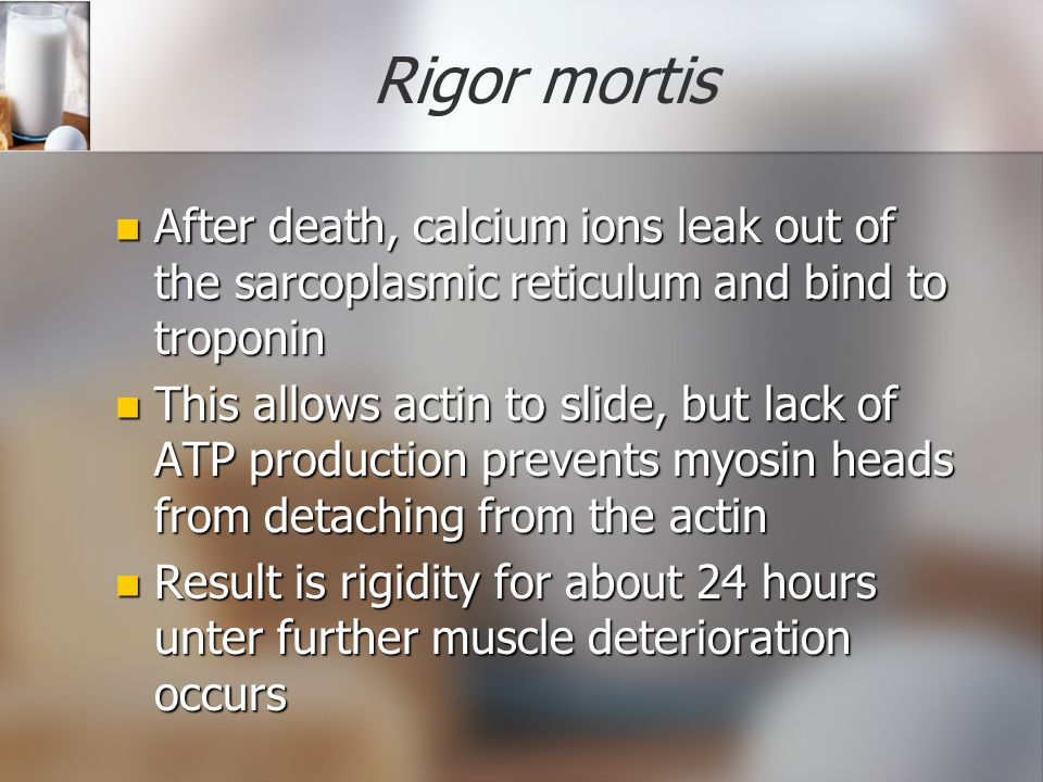 Rigor mortis After death, calcium ions leak out of the sarcoplasmic reticulum and bind to troponin.