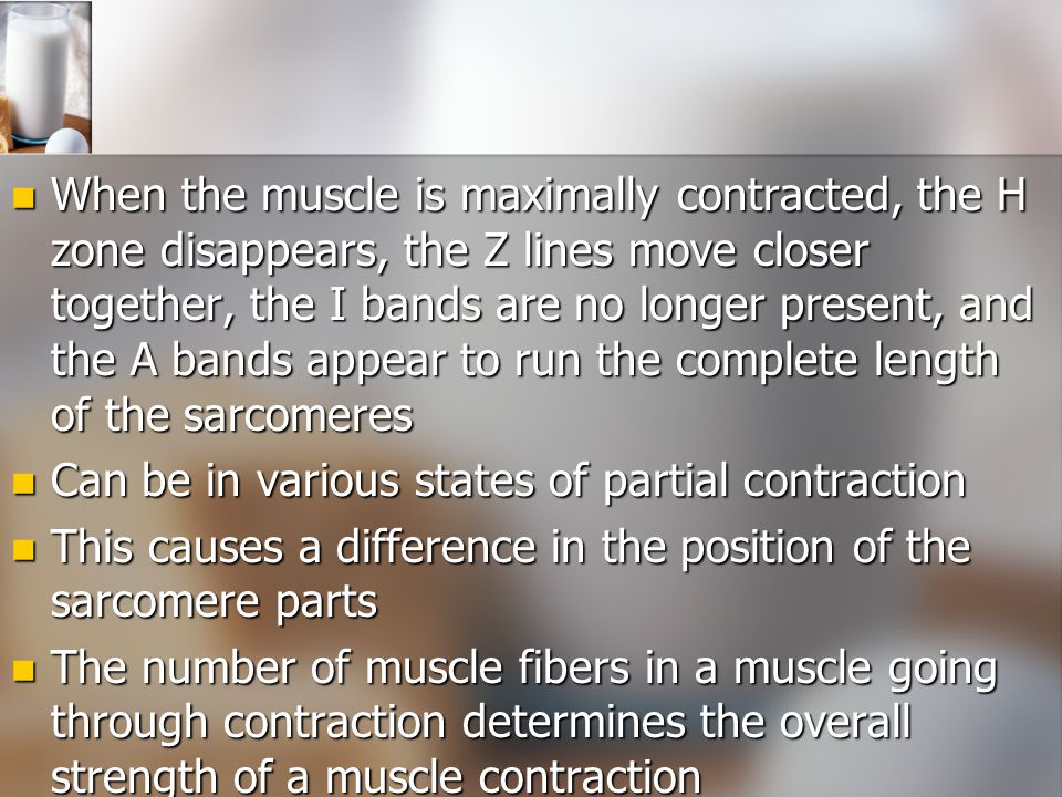 When the muscle is maximally contracted, the H zone disappears, the Z lines move closer together, the I bands are no longer present, and the A bands appear to run the complete length of the sarcomeres