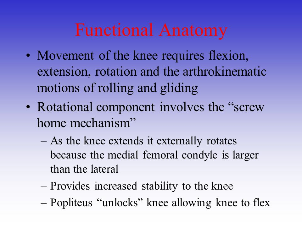 Functional Anatomy Movement of the knee requires flexion, extension, rotation and the arthrokinematic motions of rolling and gliding.