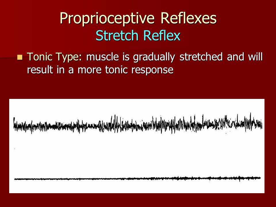 Proprioceptive Reflexes Stretch Reflex