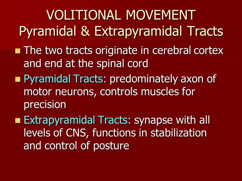 VOLITIONAL MOVEMENT Pyramidal & Extrapyramidal Tracts