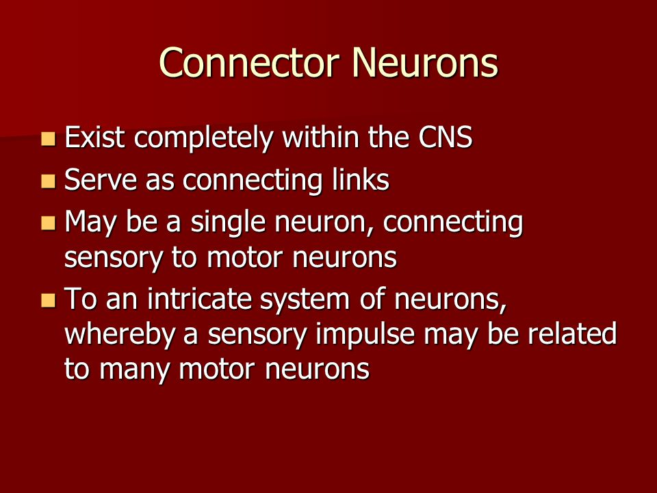 Connector Neurons Exist completely within the CNS