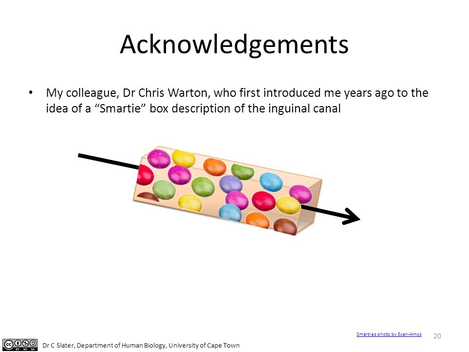 Acknowledgements My colleague, Dr Chris Warton, who first introduced me years ago to the idea of a Smartie box description of the inguinal canal.
