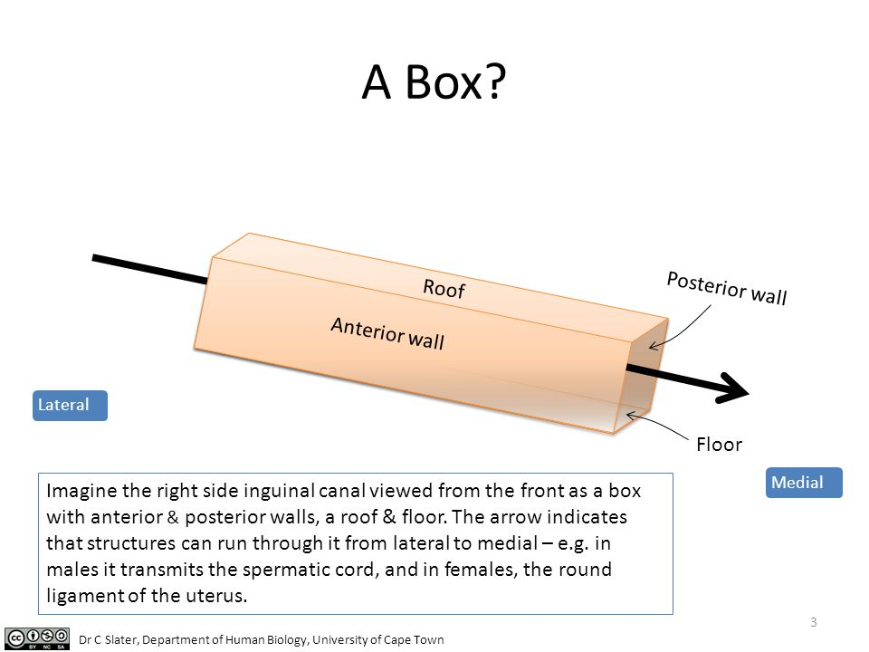 A Box Posterior wall Roof Anterior wall Floor