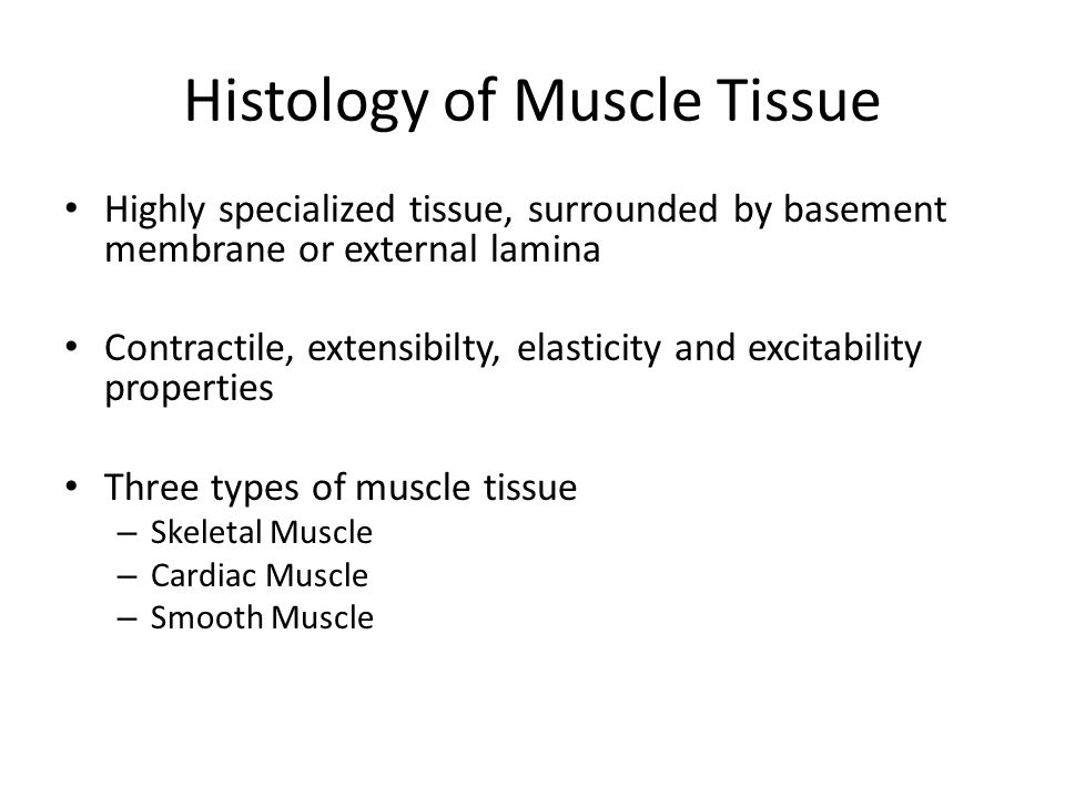 Histology of Muscle Tissue