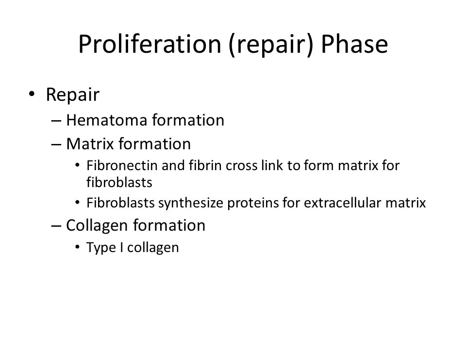 Proliferation (repair) Phase