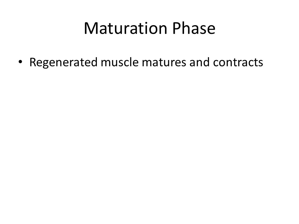 Maturation Phase Regenerated muscle matures and contracts
