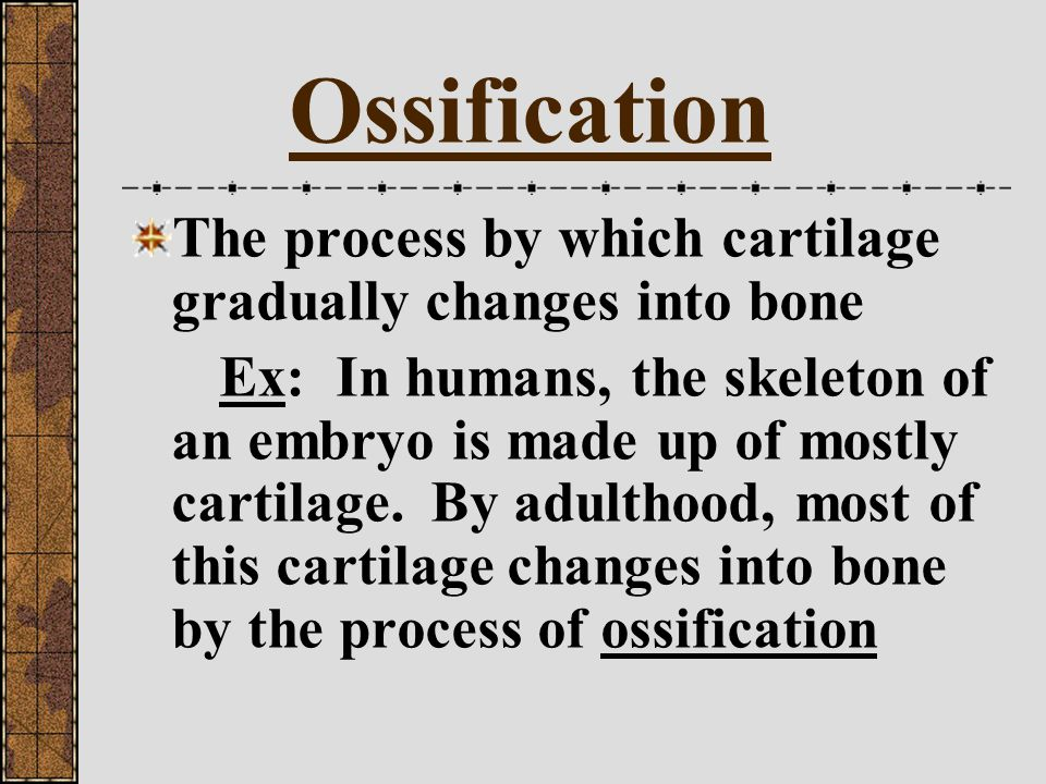 Ossification The process by which cartilage gradually changes into bone.