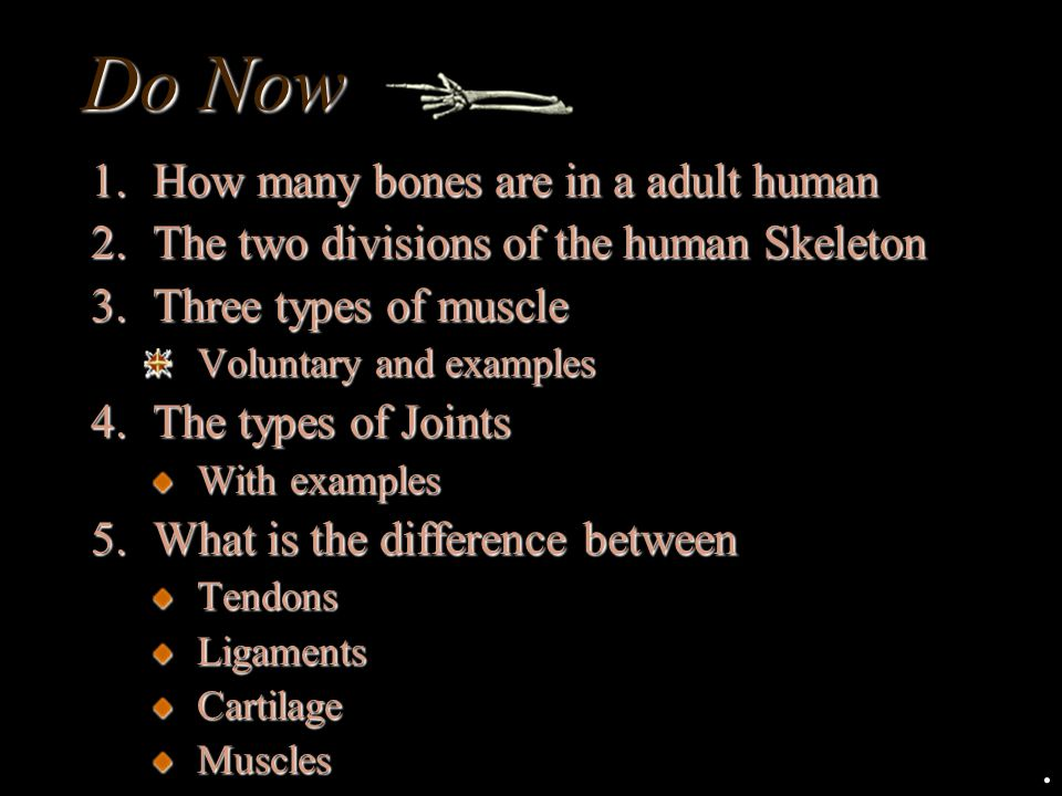 Do Now How many bones are in a adult human