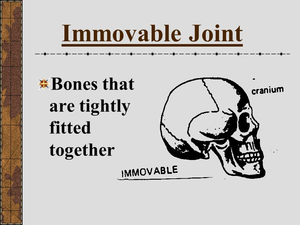 Immovable Joint Bones that are tightly fitted together
